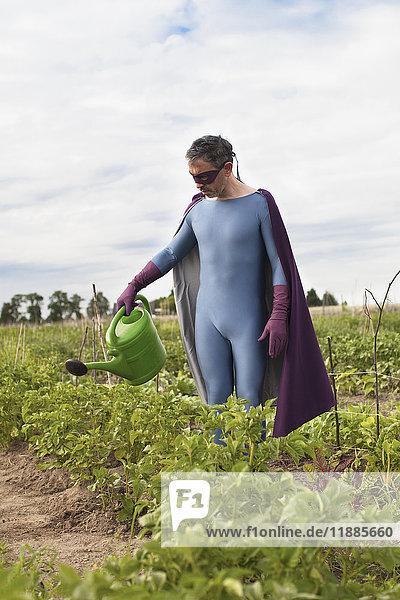 Reifer Mann in Superheldenkostüm  der im Gemüsegarten steht und Pflanzen gießt.