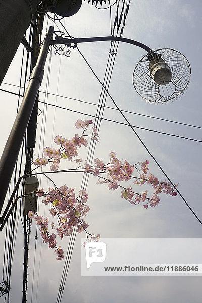 Niederwinkelansicht von Blumen durch Straßenbeleuchtung gegen den Himmel  Kyoto  Japan