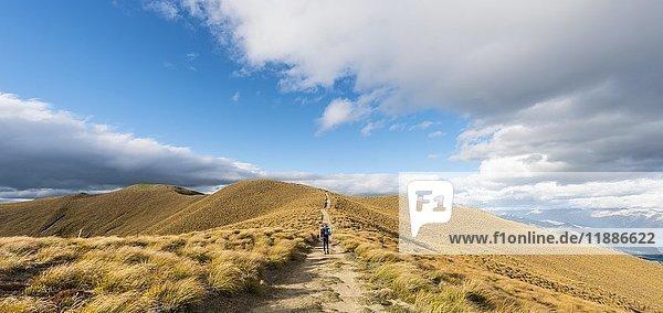 Wanderin auf Wanderweg zum Isthmus Peak  Isthmus Peak Track  Graslandschaft  Otago  Südinsel  Neuseeland  Ozeanien