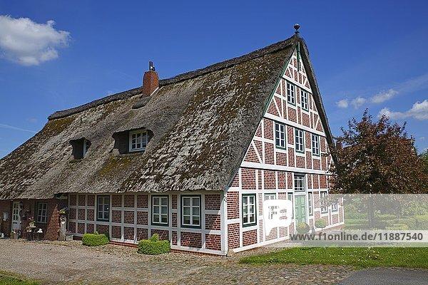 Obsthof Ohlhaver  reetgedecktes Fachwerkhaus  Jork  Altes Land Niedersachsen  Deutschland  Europa