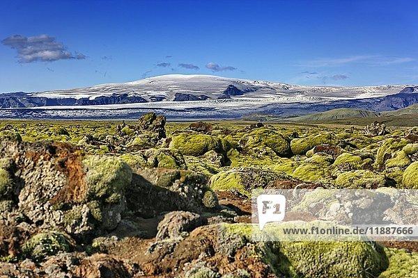 Moos bewachsenes Lavafeld Laufskálavarða  hinten Vulkan Katla  Kirkjubæjarklaustur  Suðurland  Island  Europa