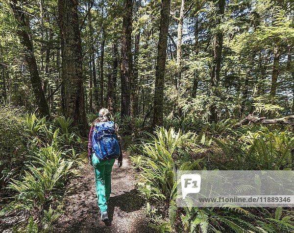 Wanderin auf Kepler Track  Wald mit Farnen  Fiordland Nationalpark  Southland  Südinsel  Neuseeland  Ozeanien