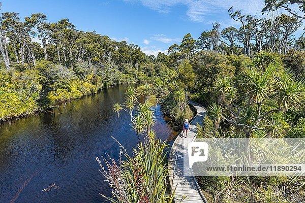 Wanderin am Fluss mit Weg  Ship Creek  gemäßigter Regenwald  Haast  West Coast  Neuseeland  Ozeanien
