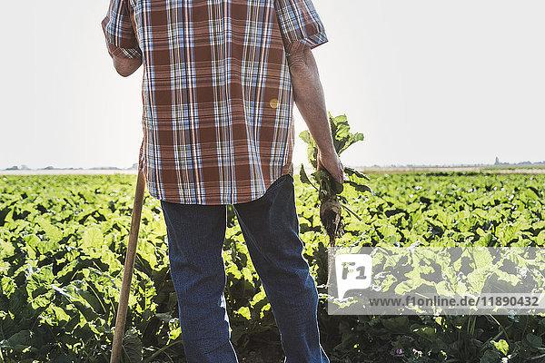 Rückansicht eines älteren Bauern mit vor einem Feld stehender Rübe  Teilansicht