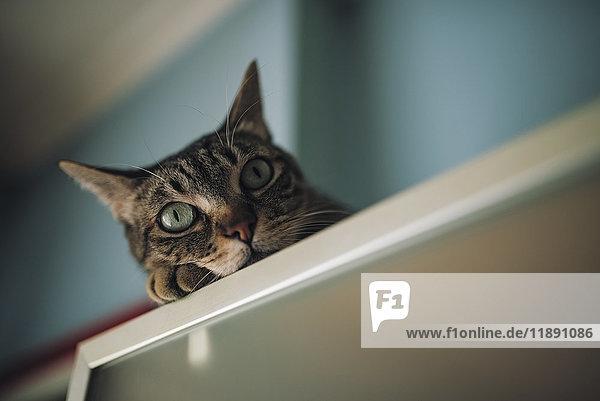 Porträt einer Katze  die sich zu Hause entspannen kann. Porträt einer Katze, die sich zu Hause entspannen kann.