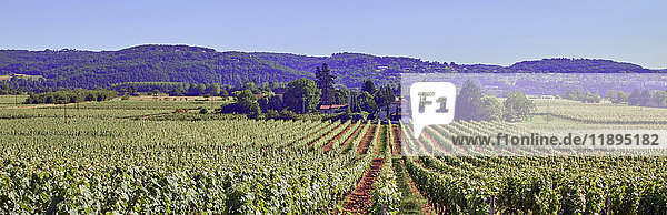 Europe  France  Occitanie  Lot  view from Crayssac area  Cahors vineyard