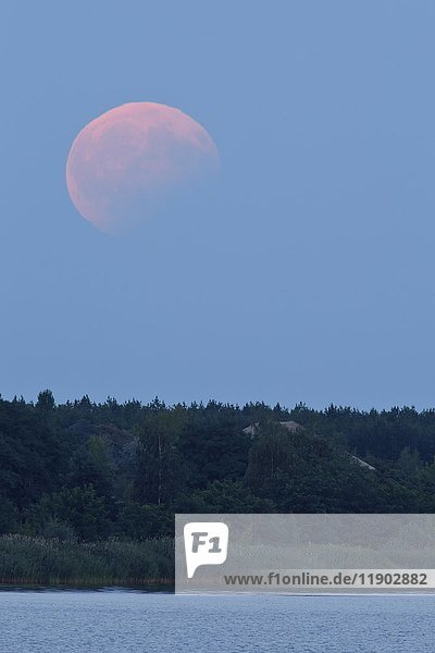 Partial lunar eclipse on 07/08/2017  Biosphere Reserve Mittlere Elbe  Saxony-Anhalt  Germany  Europe