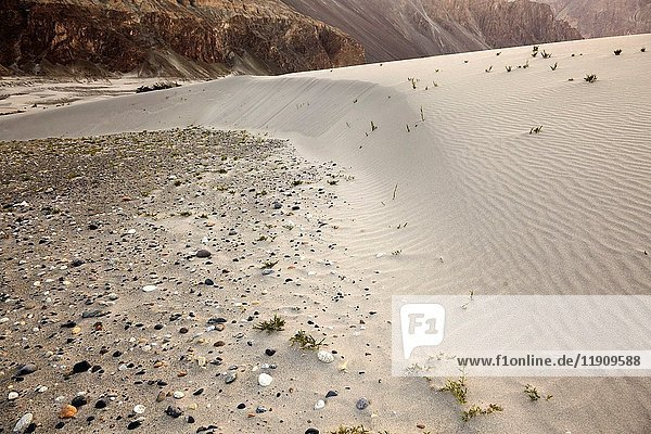 Hundar Sand Dunes  Valle de Nubra  Hundar  Ladakh  India.