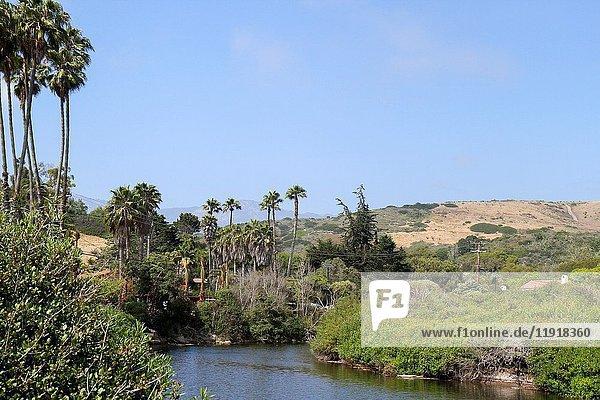 Tidepool  Arroyo Burro Beach  Santa Barbara  California  United States.