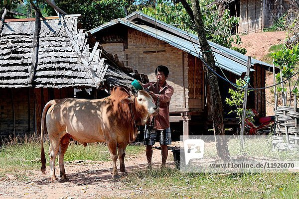 Farmer with his cow.