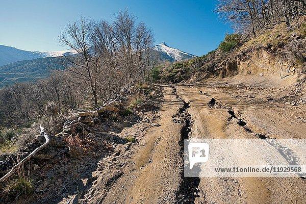 The Cabezos road in the Sierra de Gredos. Serranillos. Avila. Castilla Leon. Spain. Europe.