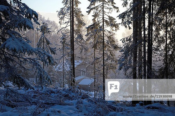 Wooden cottage in a wintry forest on a misty day. Kubbe  Västernorrland  Sweden.