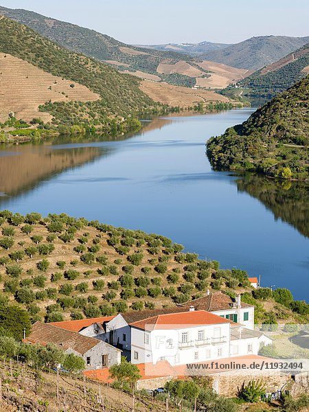 Valley of river Douro near village Coleja. The valley of river Douro. It is the wine growing area Alto Douro and listed as UNESCO World heritage. Europe  Southern Europe  Portugal  June.
