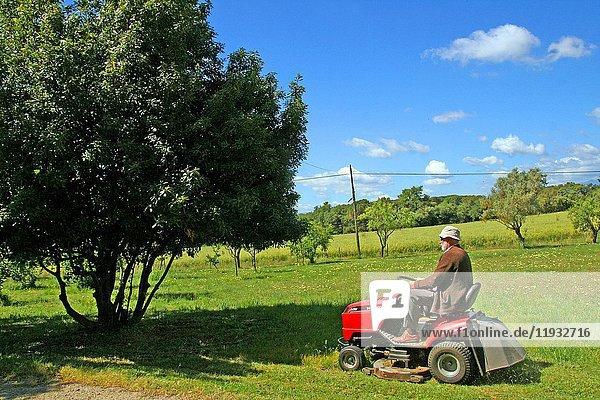 Senior man driving lawn mower  doing gardening work