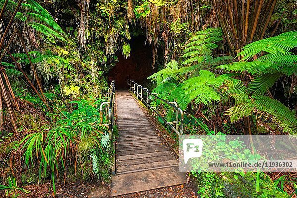 The entrance to the Thurston Lava Tube  Hawaii Volcanoes National Park  Hawaii USA.