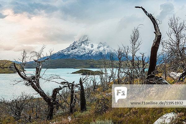 Kahle Bäume in Seenlandschaft und niedrige Wolken über den Bergen  Torres del Paine Nationalpark  Chile