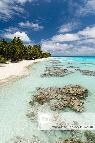 Weißer Sandstrand  Palmen und blaues Meer  Fakarava  Tuamotu-Archipel  Französisch-Polynesien