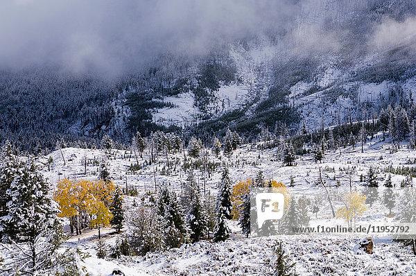 Yellowstone-Nationalpark  Wyoming  USA