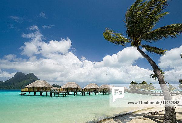 Palmen und Strandbad-Stelzenhäuser  Bora Bora  Französisch-Polynesien