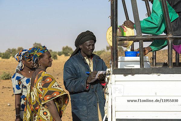 Milk collection by La Laiterie du Berger dairy company. Senegal.