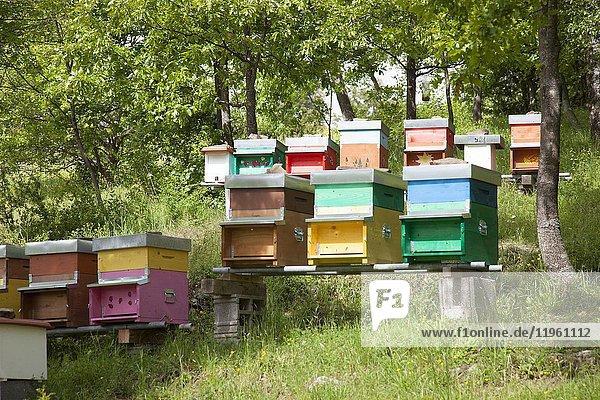 Italy  bee honey