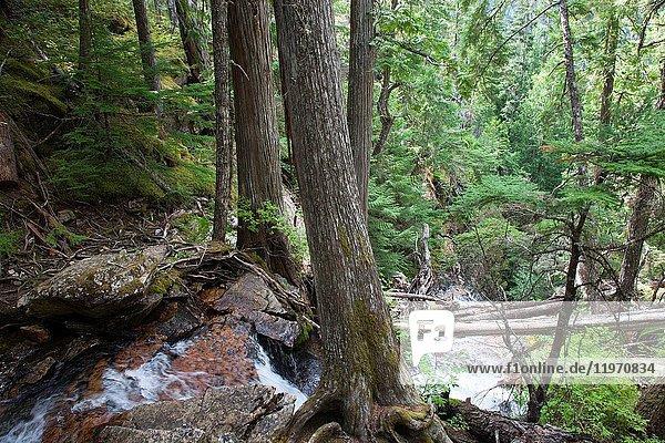 Ross Dam Trail  State of Washington  USA  America.