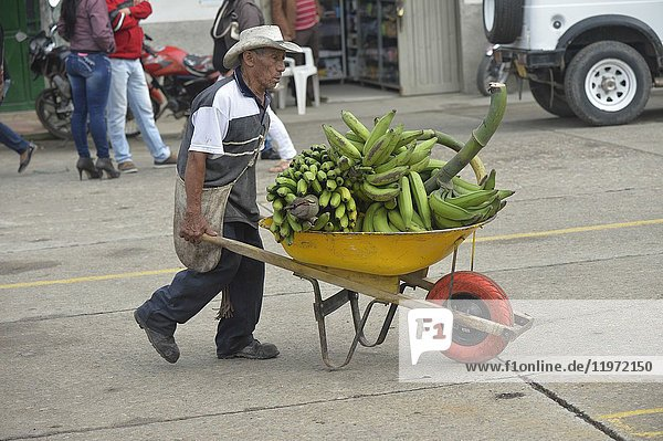 Colombian man carrying banana in San Agustin market  Colombia  South America.