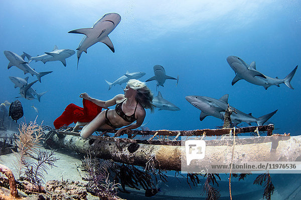 Underwater view of female free diver in bikini looking back at reef sharks  Bahamas