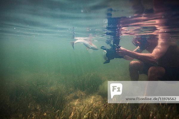 Mann filmt Rotbarsch im Golf von Mexiko  Homosassa  Florida  USA