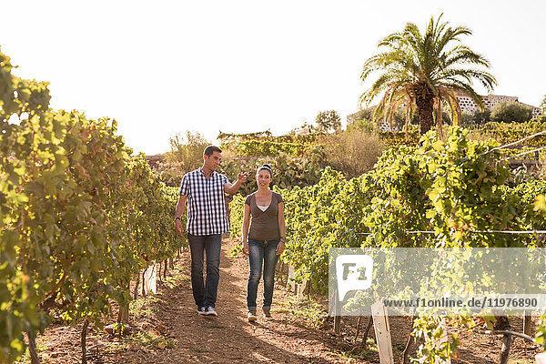 Männliche und weibliche Winzer beim Spaziergang im Weinberg  Las Palmas  Gran Canaria  Spanien