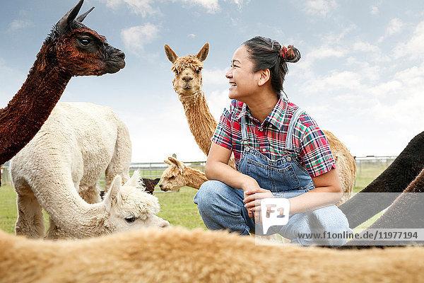 Frau sitzt mit Alpakas  von Angesicht zu Angesicht  lächelnd