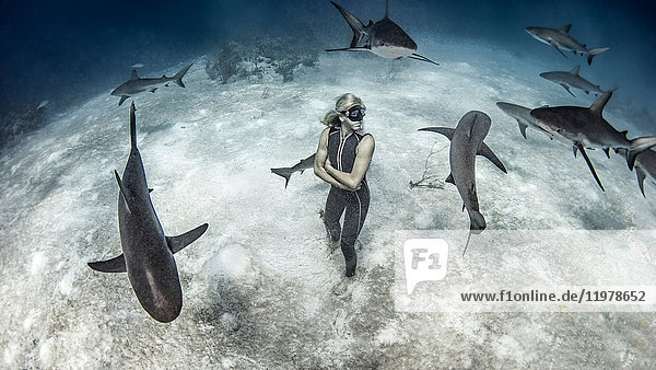 Underwater view of female free diver standing on seabed surrounded by reef sharks  Bahamas