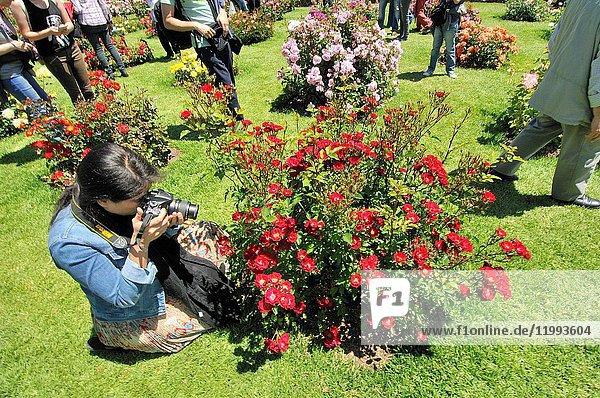 Roses contest. Cervantes Park,  Parc de Cervantes,  Diagonal avenue 708-716,  located in Pedralbes quarter,  district of Les Corts,  Barcelona,  Catalonia,  Spain
