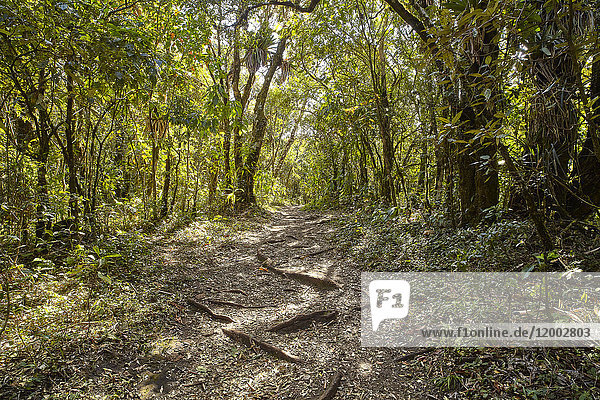 Serra da Mantiqueira, Minas Gerais, Brasilien, Südamerika, Amerika