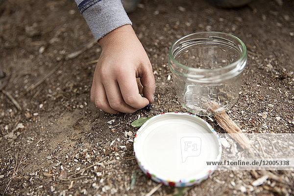 Boy's hand grabbing für Käfer auf Waldboden