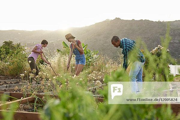 Drei Freunde bereiten einen Gemüsebeet vor