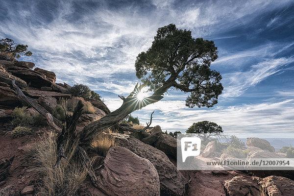 Sunbeams through tree near rocks