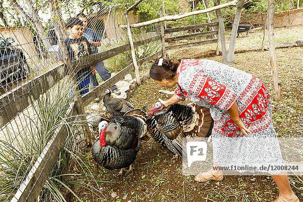 Boys watching woman petting turkeys