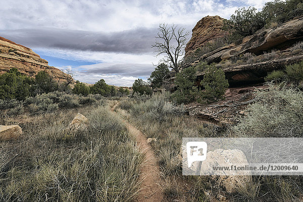 Clouds over path in desert  Moab  Utah  United States