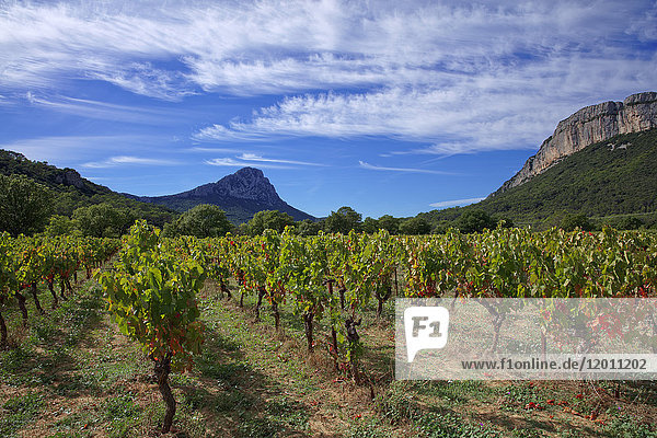 France  Herault  Pic-Saint-Loup  protected natural site  vineyard AOC hills of Languedoc