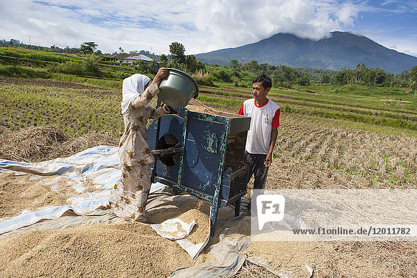 Rice harvesting near Bukittinggi and mechanical separation of rice grains and ergot empty  Bukittinggi  Sumatra  Indonesia