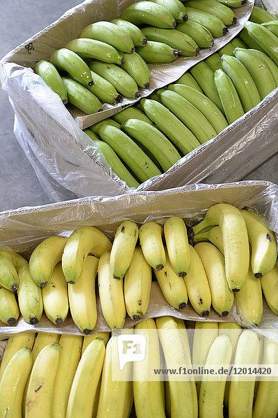 France  Paris  Rungis  crates of bananas