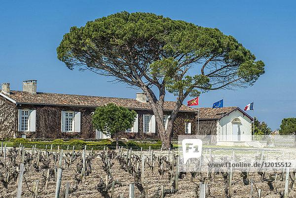 France  Gironde  Medoc  AOC St Estephe vineyard  Chateau Meyney