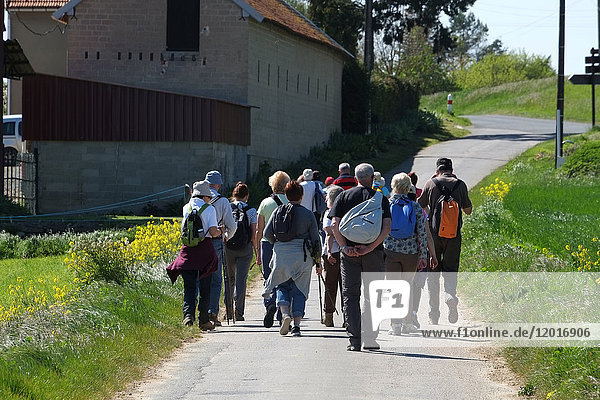 Group of hikers on a country road