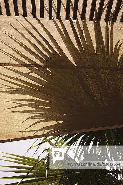 Nahaufnahme von Markise und Palmen gegen den Himmel