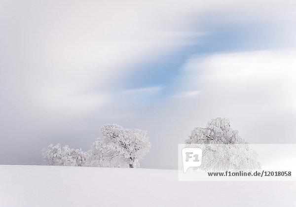 Verschneite Bäume auf dem Schauinsland  Schwarzwald  BRD