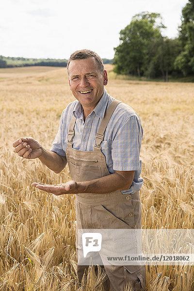 Porträt eines glücklichen Bauern  der Weizen hält  während er auf dem Feld steht.