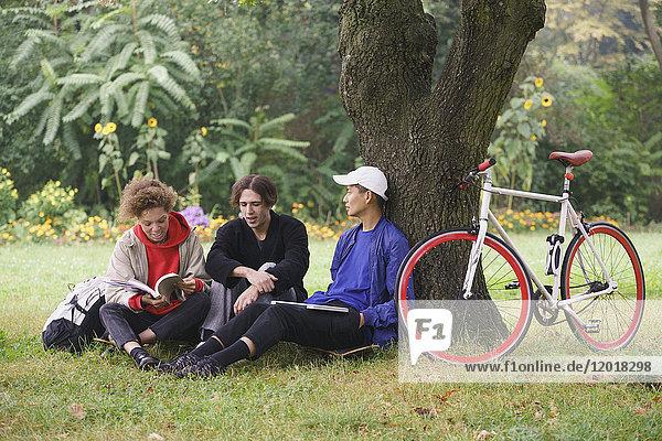 Freunde entspannen sich unter dem Baum mit dem Fahrrad auf einer Wiese im Park.