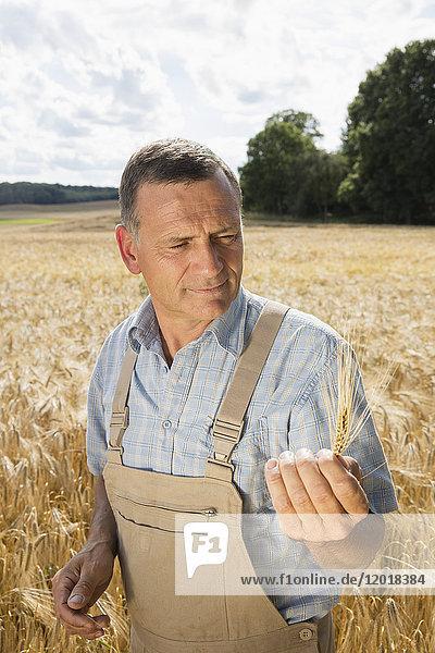 Reifer Mann mit Weizenähren im Stehen auf dem Bauernhof