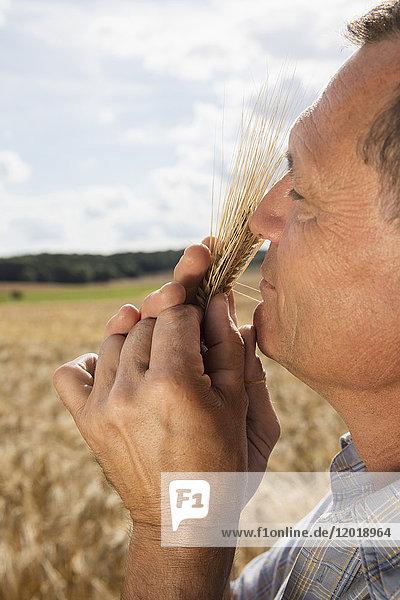 Seitenansicht des reifen Mannes  der die Weizenernte auf dem Bauernhof gegen den Himmel riecht.